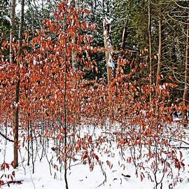 Debbie Oppermann - Fall Beech Trees