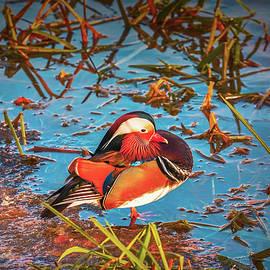 Leif Sohlman - Fall bird #g9