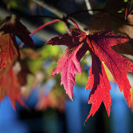 Fall Color 5528 19 by M K Miller