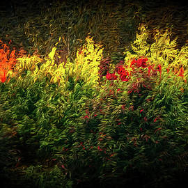Fall Colors 14 by Mike Penney