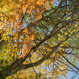Fall Colors Above Dunbar Cave by Ed Gleichman