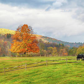 Jeff Folger - Fall colors after the storm.