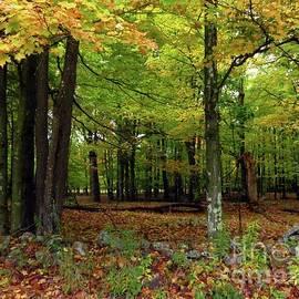 Fall Field by Donna Cavanaugh