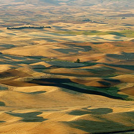 Fall Fields in the Palouse, Steptoe Butte SP, Washington by Robert Mutch