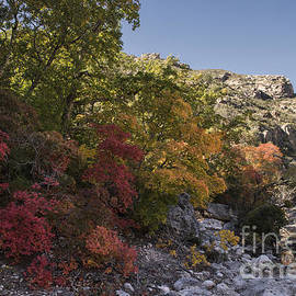 Melany Sarafis - Fall Foliage in the Guadalupes