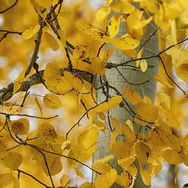 Saija  Lehtonen - Fall Gold