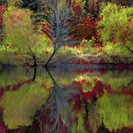 Fall Gone Wild by Jerry Gammon
