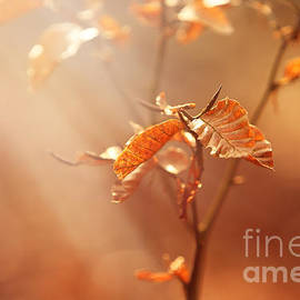 LHJB Photography - Fall is in the air....
