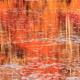 Roupen  Baker - Fall landscape reflections on the Lily Pond