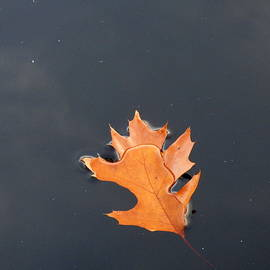 Lyuba Filatova - Fall Leaf
