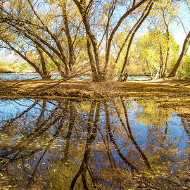 Fall Leaves Reflection by Cathy Franklin