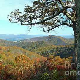 Fall Mountain Landscape at Shenandoah National Park by Maili Page