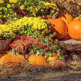 Fall Pumpkins by Carolyn Marshall