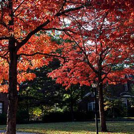 Fall Season In Columbia South Carolina by Susanne Van Hulst