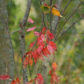 Eric Irion - Fall tree colors
