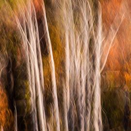 Don Johnson - Fall Trees Abstract