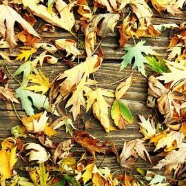 Honey Behrens - Fallen Autumn Leaves