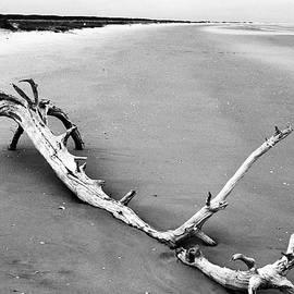 Fallen Tree Beach by Thomas R Fletcher