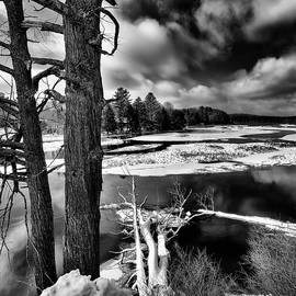 David Patterson - Fallen Trees in the Moose River