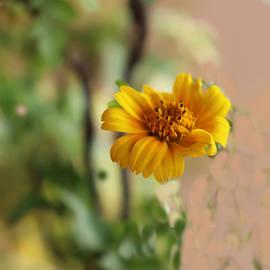 Nilu Mishra - Falling flower