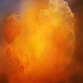 Terry Davis - Falling Into Beauty