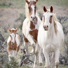 Athena Mckinzie - Family Of Wild Horses