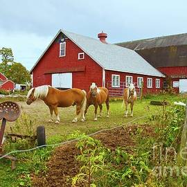 Family On The Farm by Amazing Jules
