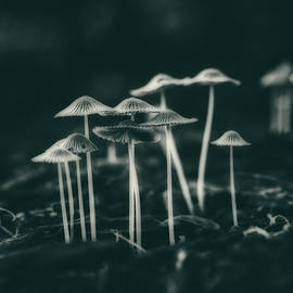 Fanciful Fungus - Tom Mc Nemar