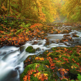 Fantasies of Fall by Darren White