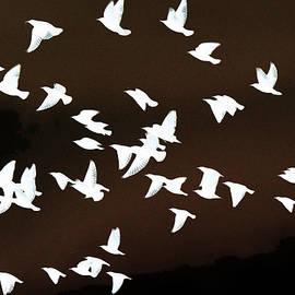 Robert Frank Gabriel - Fantasy Flock of Starlings