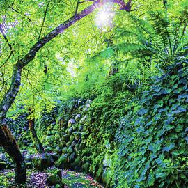 Fantasy Garden  by Naomi Burgess