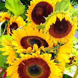 Ed Weidman - Farm Stand Sunflowers #7