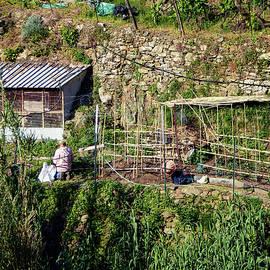 Joan Carroll - Farming in Cinque Terre Italy