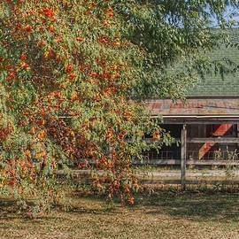 6007 - Farrand Road Red Corral By Flowering Tree by Sheryl Sutter
