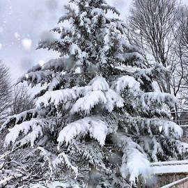 Elizabeth Dow - Favorite Tree