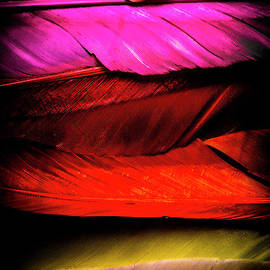 Jorgo Photography - Wall Art Gallery - Feathers of rainbow color