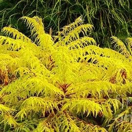 Craig Wood - Feathery Yellow