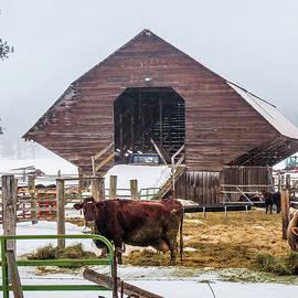 Feed Barn by William Krumpelman