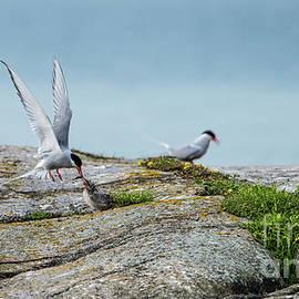 Torbjorn Swenelius - Feeding flying