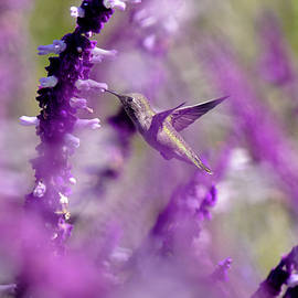 Feeding in the Midst of Purple 1