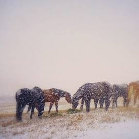 Kelly A Wolfe - On Winter Pasture