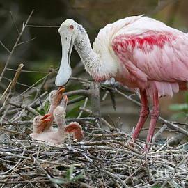 Myrna Bradshaw - Feeding the Babies