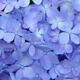 Feeling Blue by Sabrina L Ryan