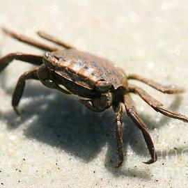 Feeling Crabby by Angela Rath