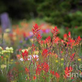 Jim Garrison - Feild Of Flowers