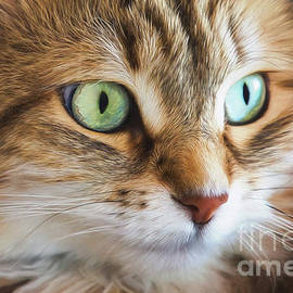 Feline Focused Intensity by Sharon McConnell