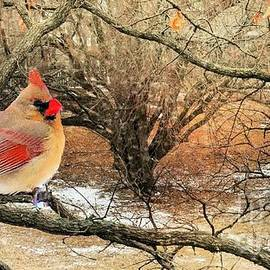 Female Cardinal Caught in the Snow by Janette Boyd