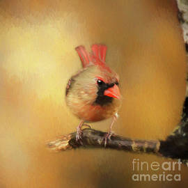Female Cardinal Excited for Spring by Darren Fisher