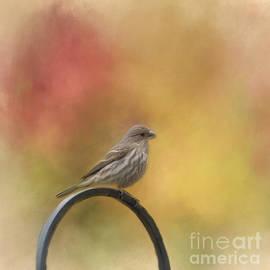 Female Finch by Kathleen Rinker
