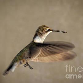 Janice Rae Pariza - Female Hummingbird